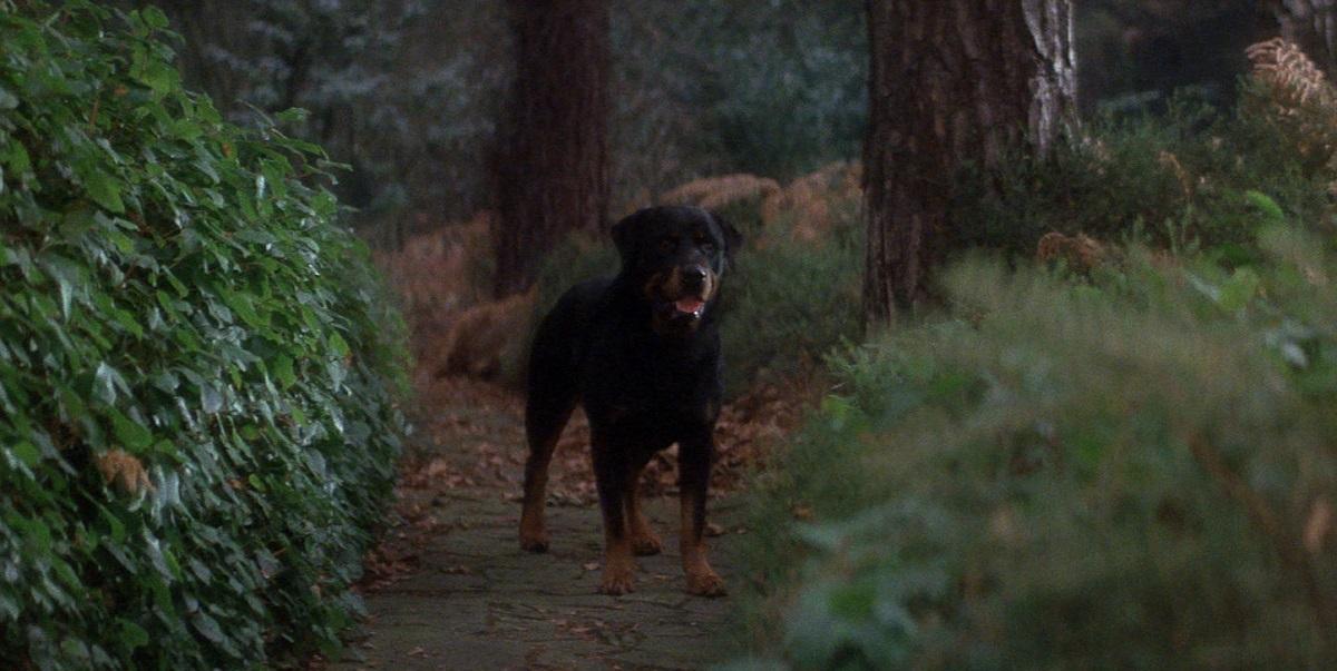 OriginalHellhound
