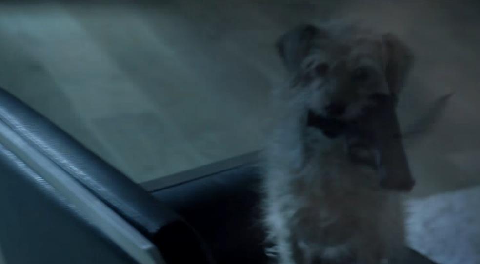 Φανταστικό βίντεο που βάζει τον σκύλο του John Wick στη θέση του επαγγελματία εκτελεστή! - Roxx.gr