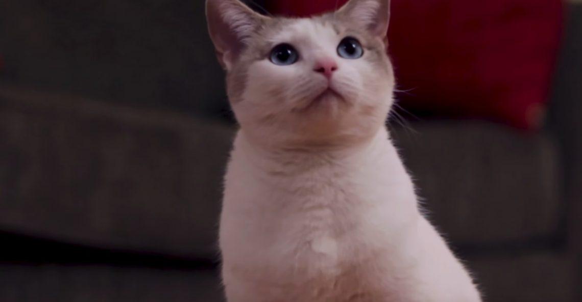 Αν γουστάρετε διαβολικές γάτες αυτή η ταινία είναι για εσάς - Roxx.gr