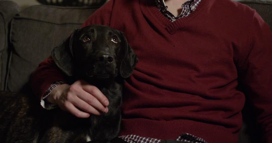 Netflix binge-watching με σκυλιά (και γατιά) - Roxx.gr