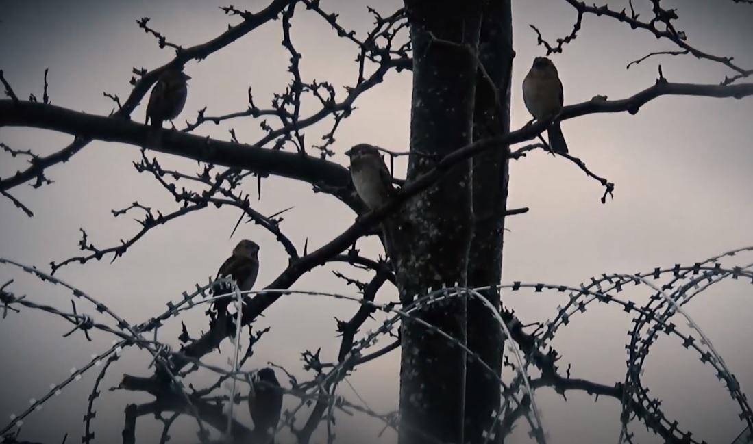 Στην κοιλάδα της βαθιάς σκιάς: Μία ταινία μικρού μήκους από τον τραγουδιστή των Panx Romana - Roxx.gr